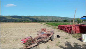 Caguray灌漑システムの農業用地